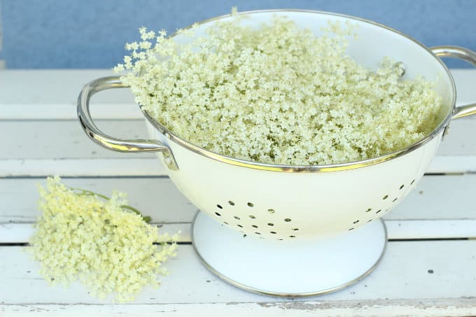 How to make delicious Elderflower Syrup www.chalkingupsuccess.com Freshly picked Elderflowers in a colander(2)