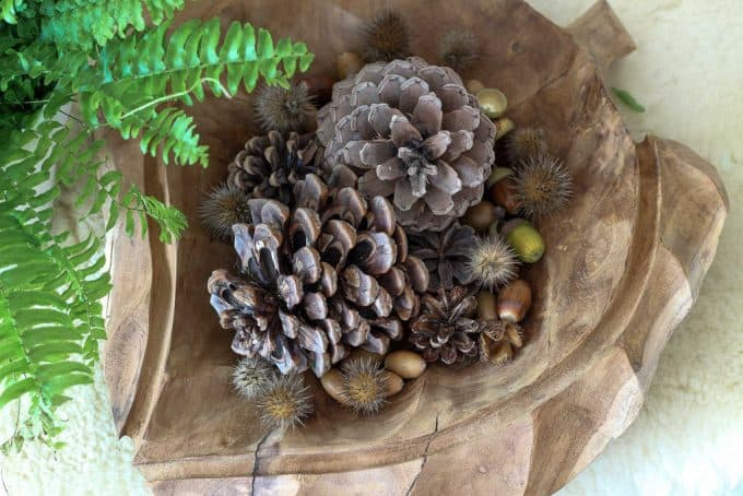 Wooden bowl carved in the shape of a leaf. Filled with acorns, pine cones and dried seedheads. Photo by chalkingupsuccess-dot-com. #zerowaste #zerowastetablescape #autumntablescape