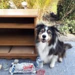 Chalk painted media stand before it was painted & stencilled with chalk paint. Brilli the black tri Australian shepherd is sitting close by 'keeping watch!'