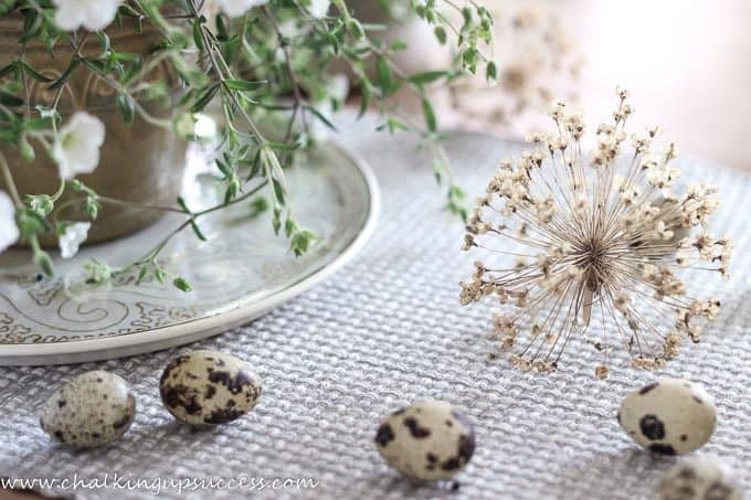 A white folowering plant sprawling onto a table where brown speckled eggs and alium seedheads lay.