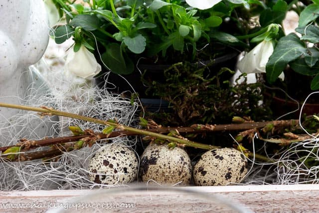 Decorate the Easter Centrepiece with broan and cream speckled Quail's eggs