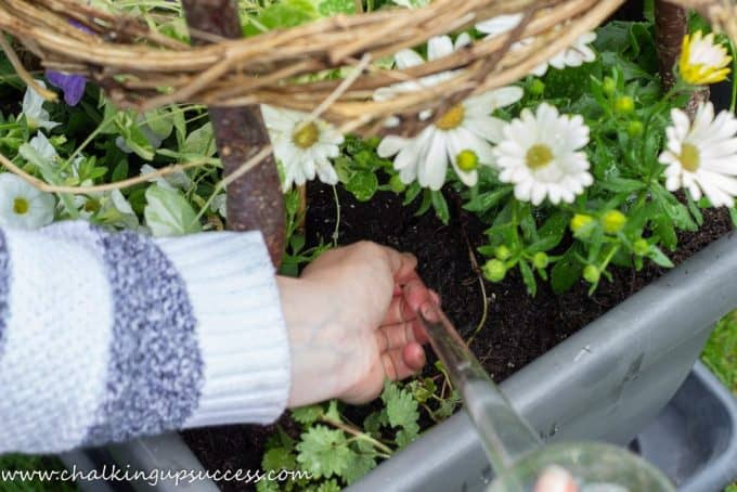 Adding a glass watering bulb to the annual container