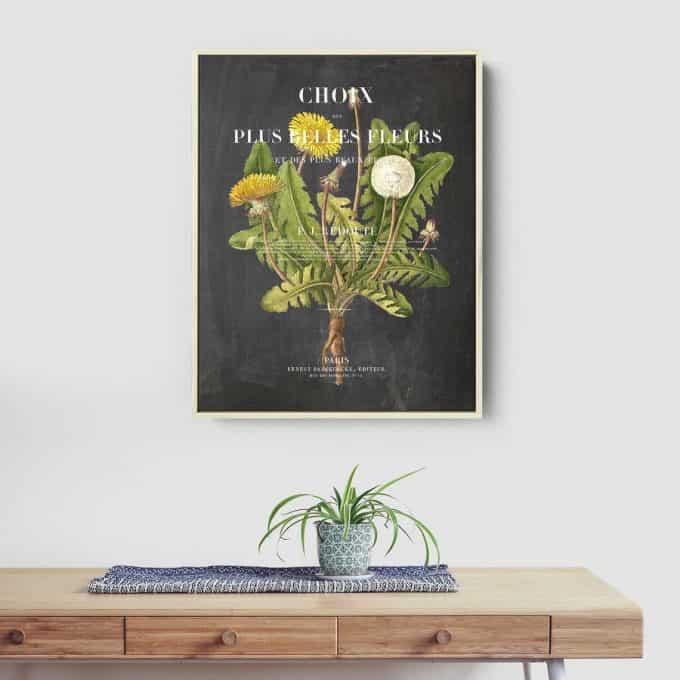 Vintage Dandelion print on a chalk blackboard background - affordable botanical art