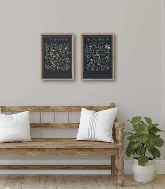 Herbarium Poster with black background - affordable botanical art