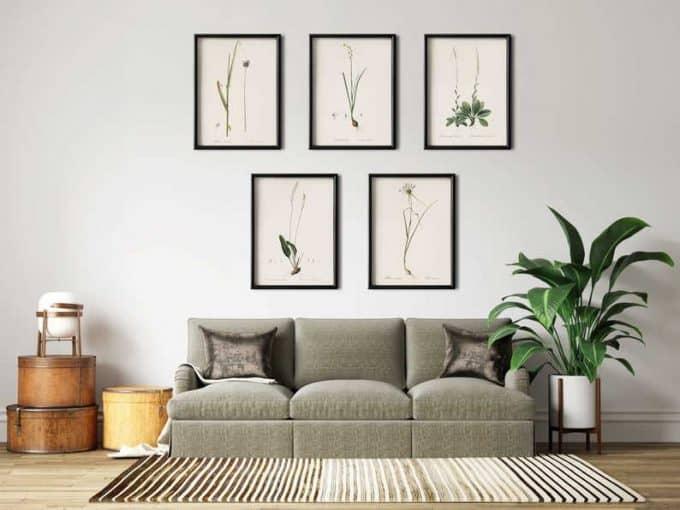 Minimalist herbs - affordable botanical art