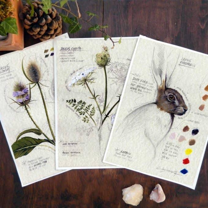 Woodland Animals and Plants - affordable botanical art