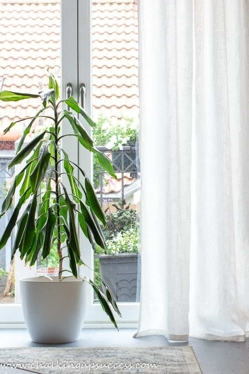 Showing one half of white linen curtains hanging at a window. A green plant and a white pot stands between the curtains.