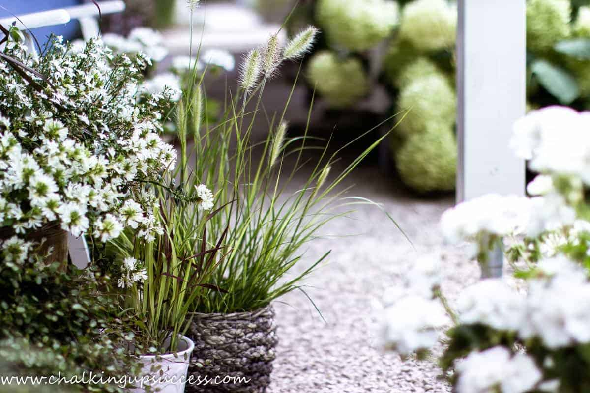 Fall decor ideas in the garden - Autumn grasses in pots outside the front door